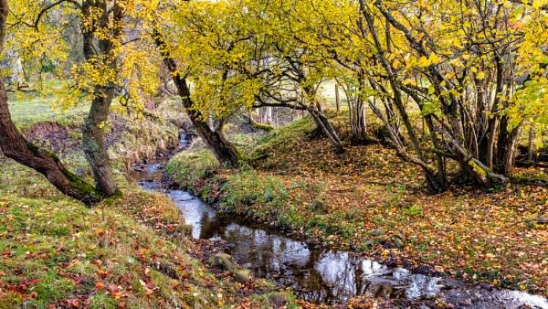 Woodland Stream by mbradley
