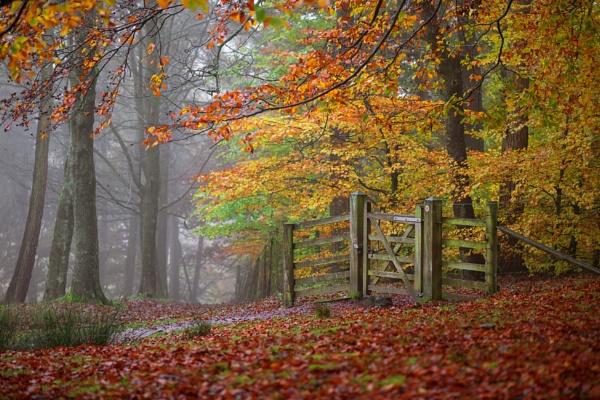 Autumn Gate by Trevhas