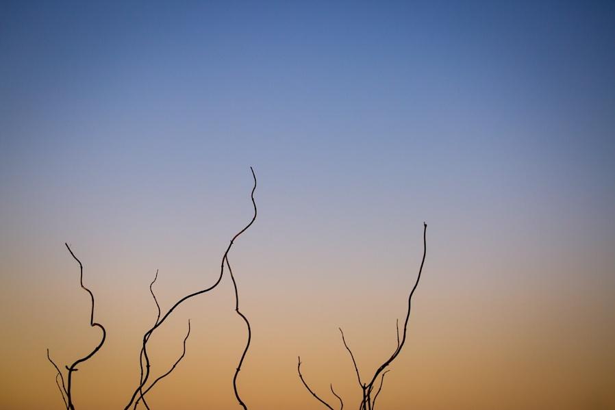 Twigs...