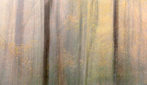 Last leaves..... by trusth