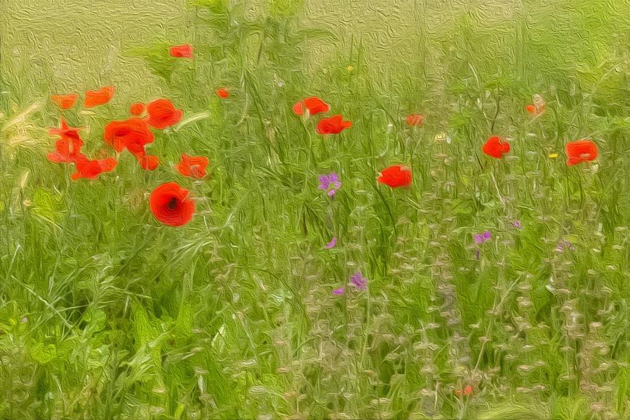 Wildflowers....