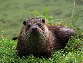 Otter Full On