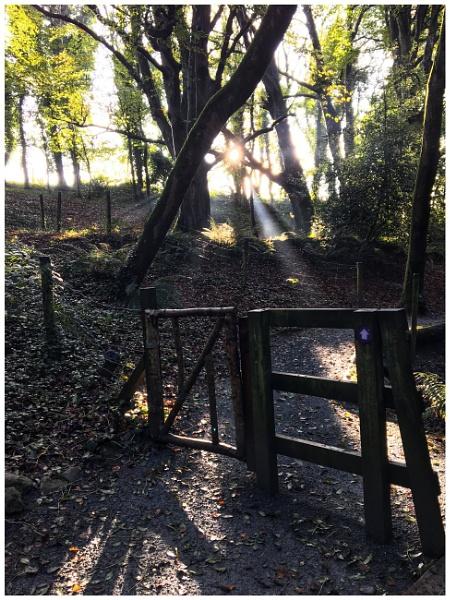 Woodland Walk by Trish53