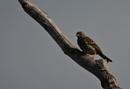 On a dead tree by frogs123