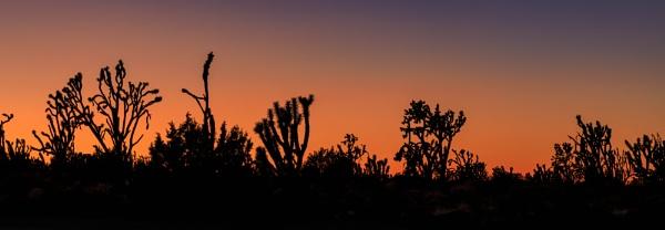 Joshua Sunset by SalmanLV