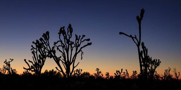 Joshua Sunset 2 by SalmanLV