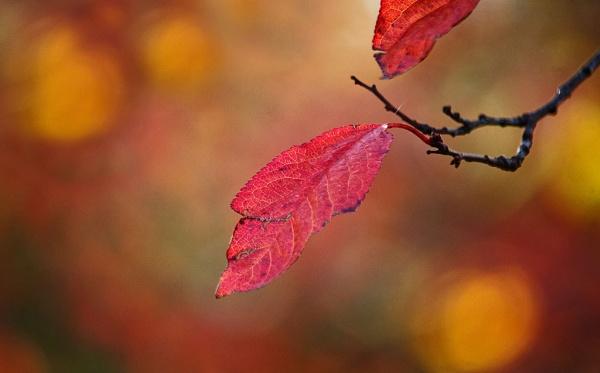 autumn 6243 by LaoCe