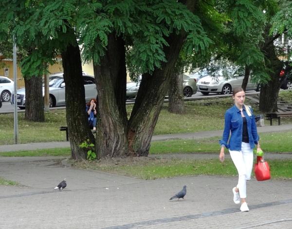 Pigeons by SauliusR