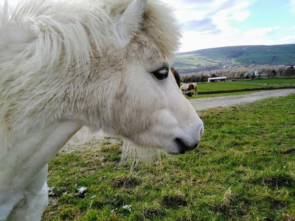 Bleakholt Animal Sanctuary by ColinScholes8854