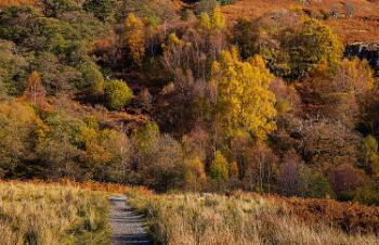 Pathway to Autumn