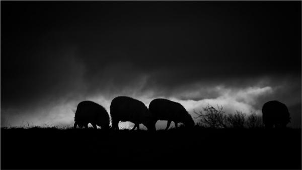 Sheep town by KingBee