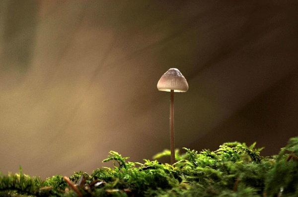 Forest Bonnet by viscostatic