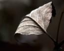 Leaf 3 by viscostatic