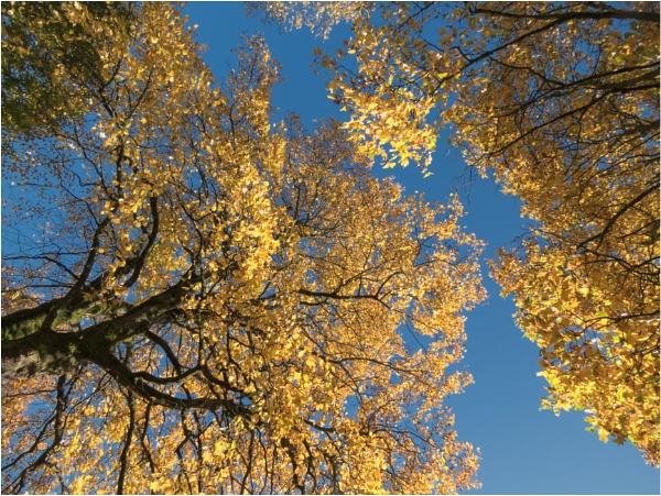 I looked upwards. by franken