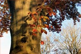 Evening shadows at Charlecote Park