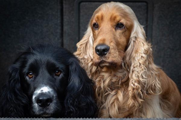 Finn & Bailey by ColinScott