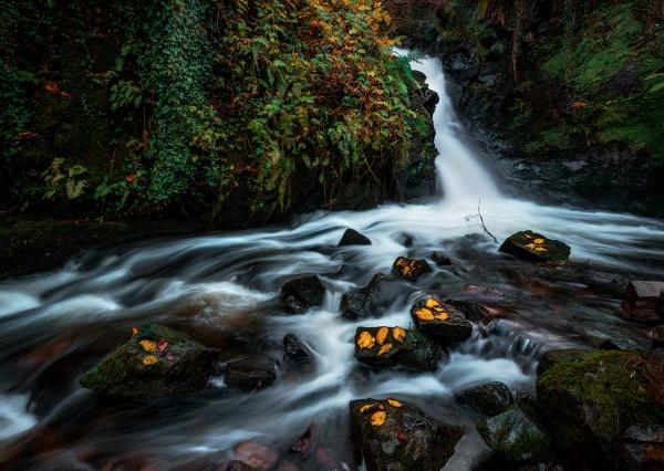 Autumn gold by brzydki_pijak