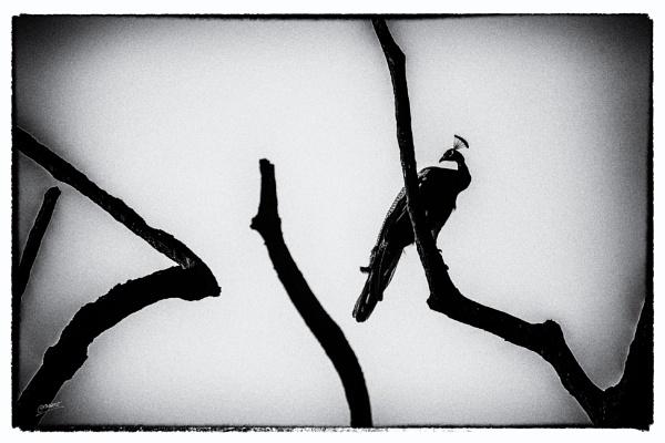 Barren... by clicknimagine