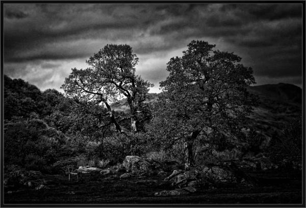 Bleak Landscape (4) by PhilT2