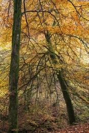 Autumn Angle