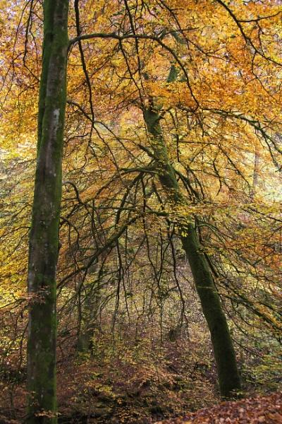 Autumn Angle by Irishkate
