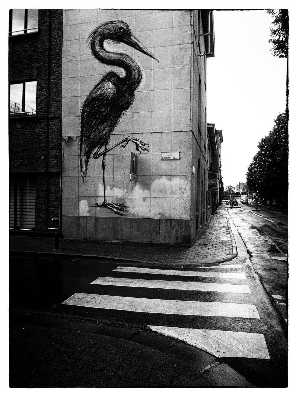 Stork Crossing