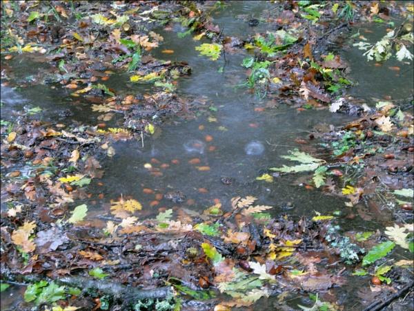 Autumn rain by laura1