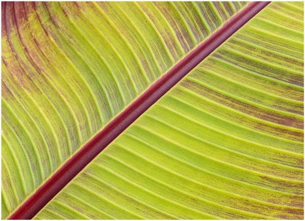Banana Angle by capto