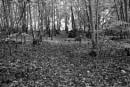 In The Woods 13 by Nikonuser1