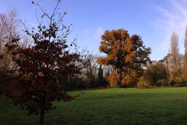 autumn oaks by retroman