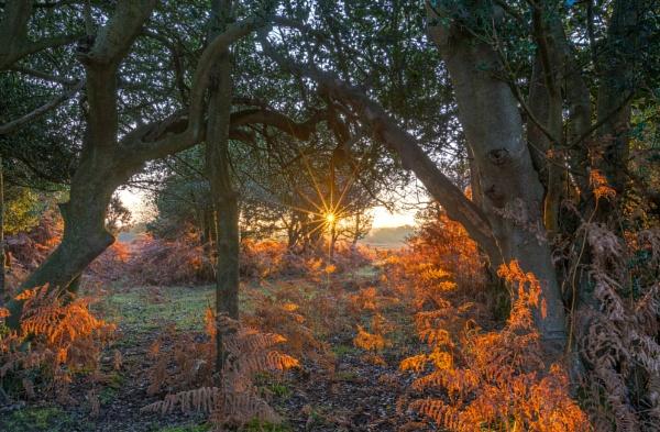 Bracken Sunrise by NickLucas