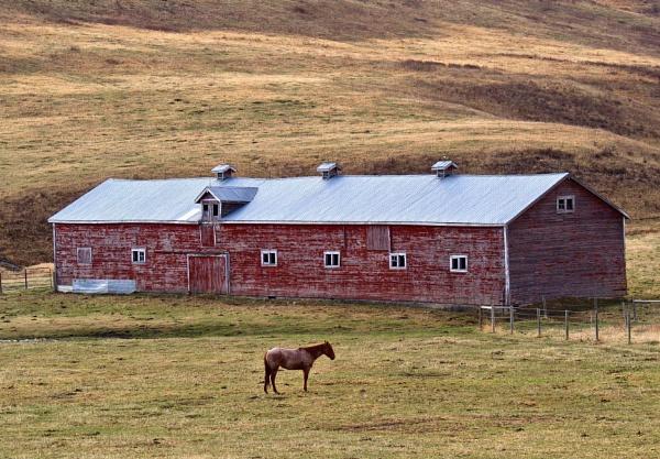 Outside the  barn by waltknox