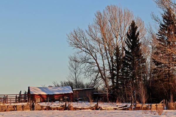 Snuggling into winter by waltknox