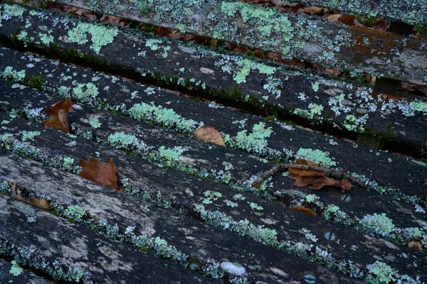 Lichen On A Seat by JJGEE