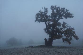 Shattered oak