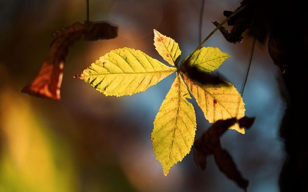 chestnat autumn by LaoCe