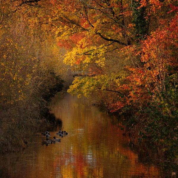 Autumn Scene by HarmanNielsen