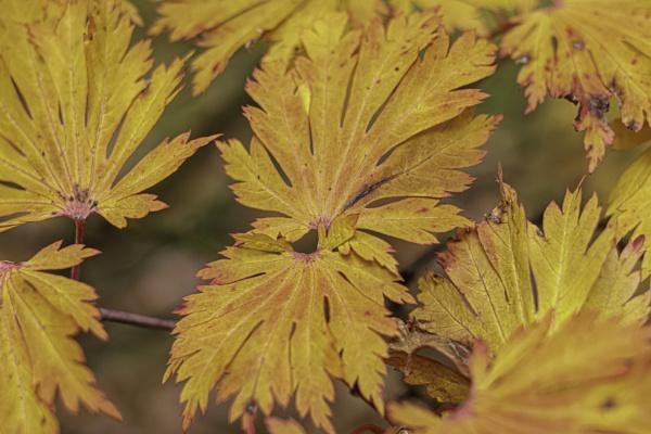 Karaoke leaf by OverthehillPhil