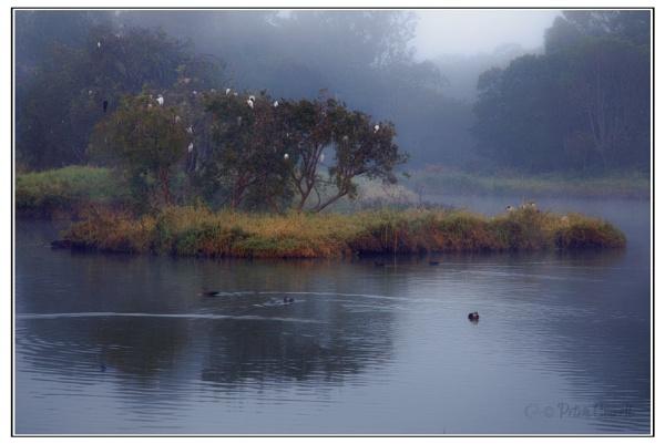 Misty Lake by Peco