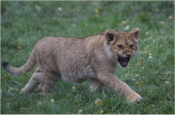 Lion King by AnnetteK