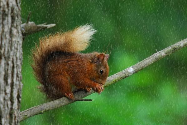 Blooming weather getting me nuts wet by fordie