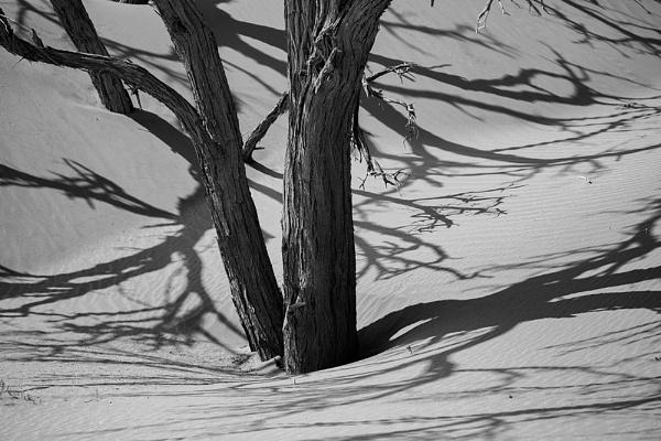 Acacia Shadows by rontear
