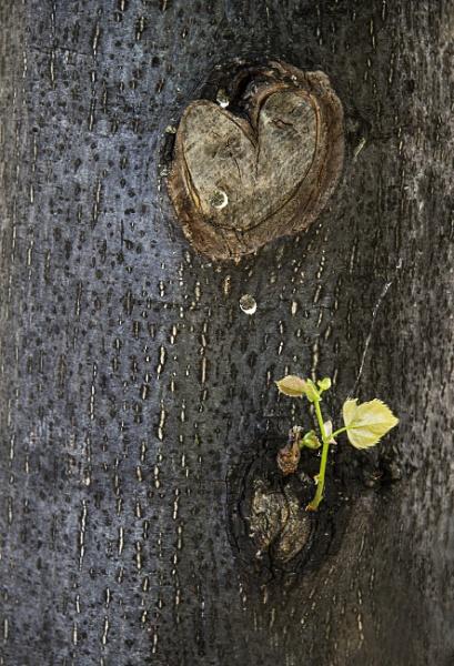 Tree Lover by Irishkate