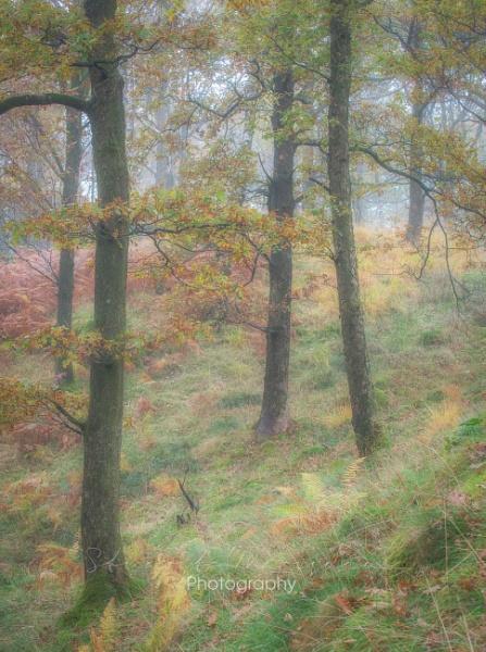 Little Langdale Wood by Stumars