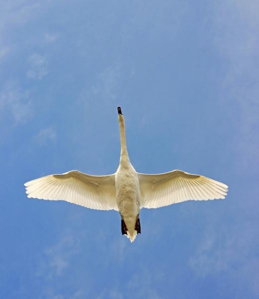 flight by adrian2208