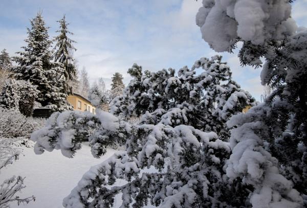 Snow. by kuvailija