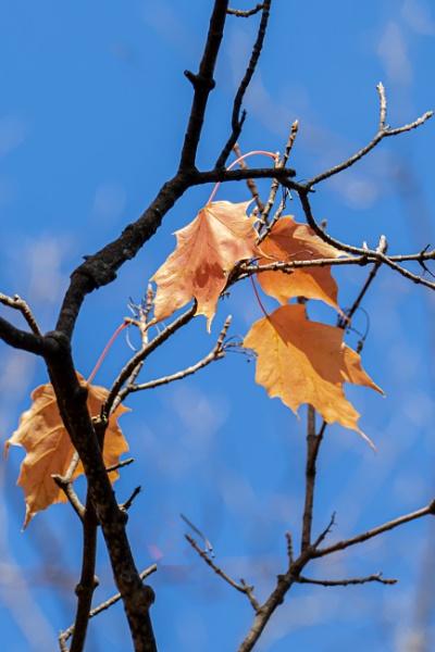 Fall leaf by manicam