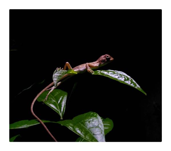 Chameleon by jamesthalakottur