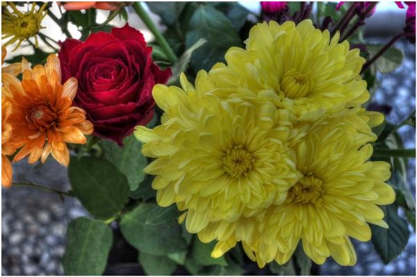 Sunday Flowers by sueriley