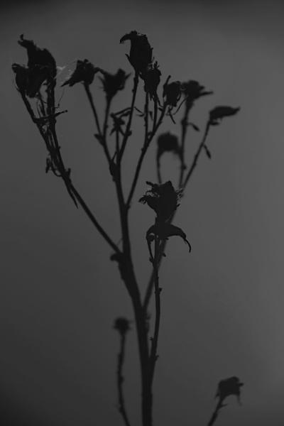 Plant in black by Madoldie